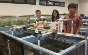Tim Mino UGM di kolam percobaanya di Yogyakarta, Senin (31/10/2016). (foto : istimewa)